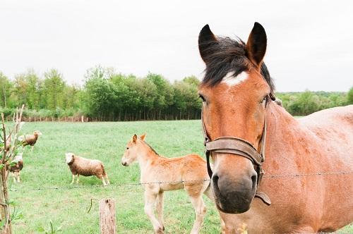 Gîte à la ferme avec des animaux en Normandie